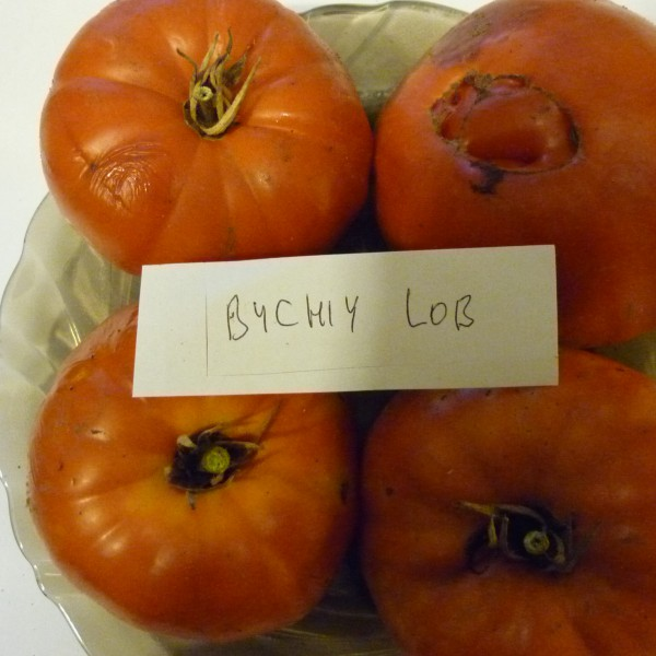Bichiy Lob