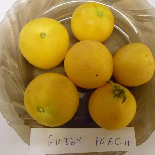 Fuzzy Peach