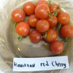 Hawaiian Red Cherry