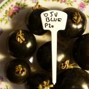 OSU Blue P20-2