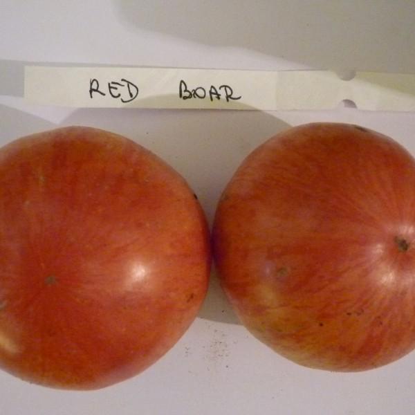 RedBoar