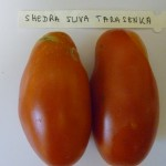 Shedra Sliva Tarasenka