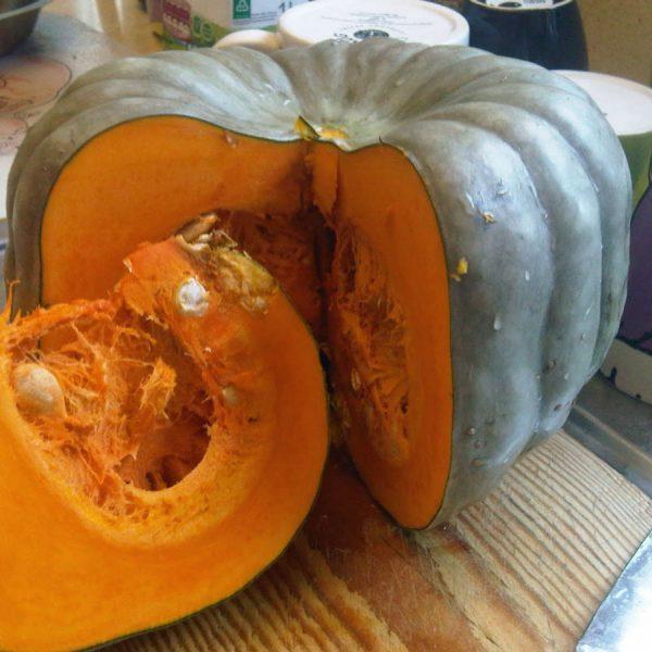 queensland-blue pumpkin