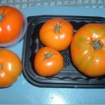 angora orange6