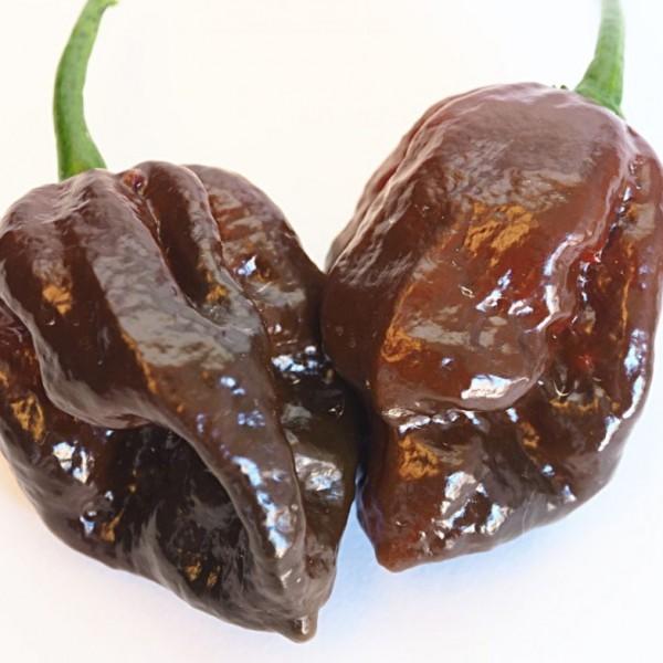 Chocolate-Barrackpore