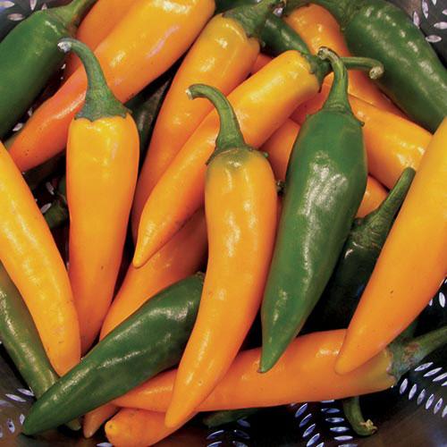 bulgarian-carrot-pepper