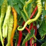 corbaci-pepper